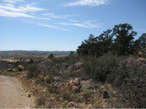 14550 Warbler, Prescott, AZ